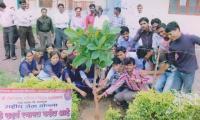 plantation3.jpg